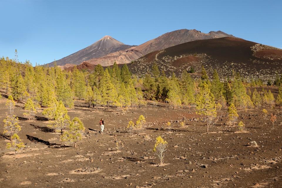 Montée vers le Teide, plus haut sommet de Ténérife, novembre 2012