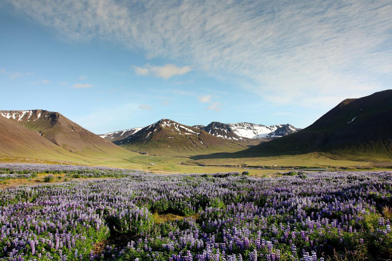 Les Alpes du Nord-Ouest, Islande