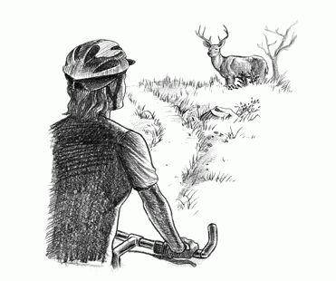 respecter la faune en randonnée © 2008 Leave No Trace