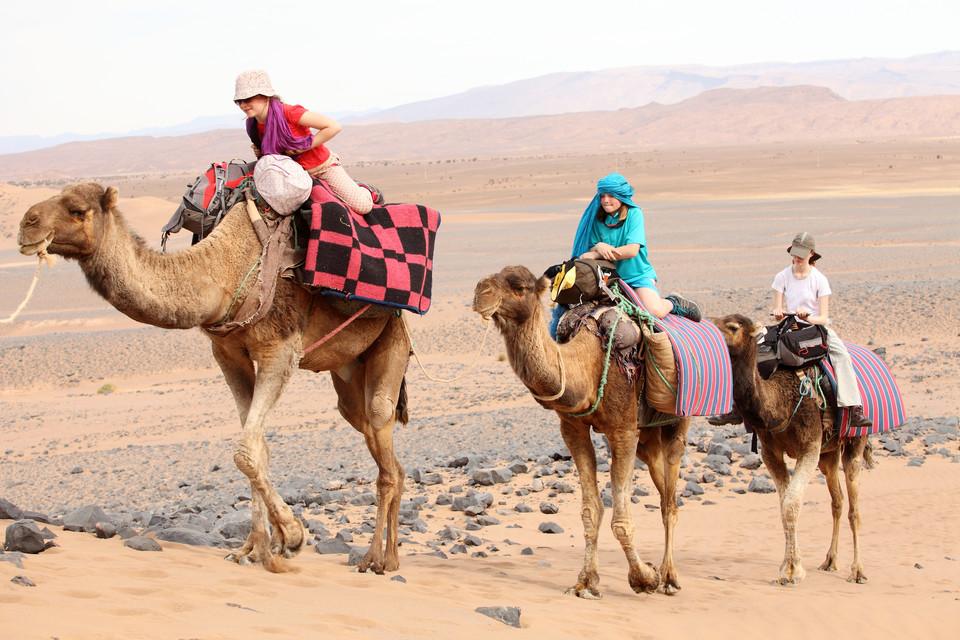 """Résultat de recherche d'images pour """"dromadaire maroc"""""""