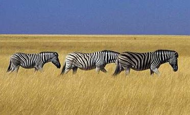 Aventure au Botswana