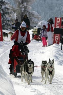 Equipement pour des courses de chiens de traîneaux
