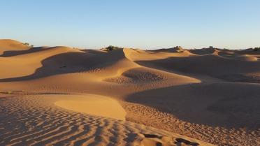 le désert M'hamidTrek dans le desert M'hamid (Maroc