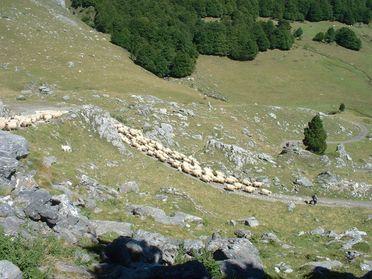 Le Parc naturel régional des Pyrénées recrute