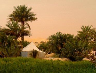 Les palmeraies de l'Adrar mauritanien