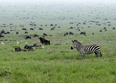 Les parcs nationaux de Tanzanie