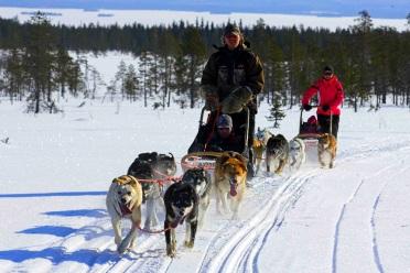 Randonnée en chiens de traineau