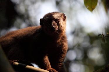 Parc National de Ranomafana, son village et ses lémuriens