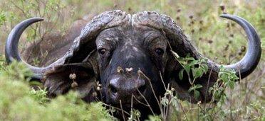 Safari en pays Masaï