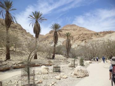 Trek familiale dans l'oasis d'Ein Guedi