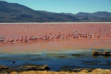 Volcans de Bolivie et Salars d'Uyuni