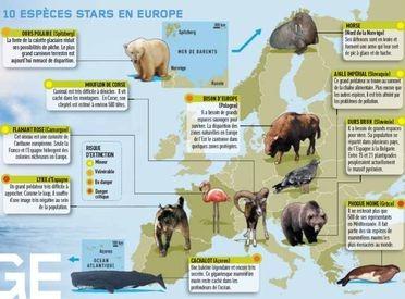 Wild wonders, Europe Sauvage